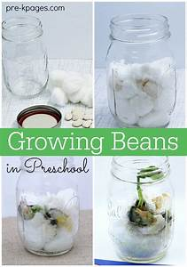 Planting and Growing a Beanstalk in Preschool - Pre-K Pages
