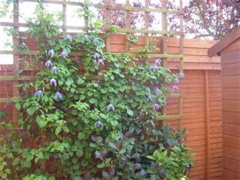 Climbing Evergreen Plants  Garden Design Ideas