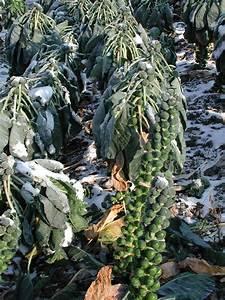 Gemüse Im Winter : sie wollen im winter frisches gem se ernten bauernzeitung ~ Pilothousefishingboats.com Haus und Dekorationen
