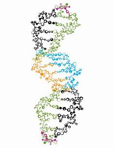 DNA Strand Vector - AI - Free Graphics download