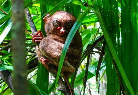 global biodiversity conservation  save species