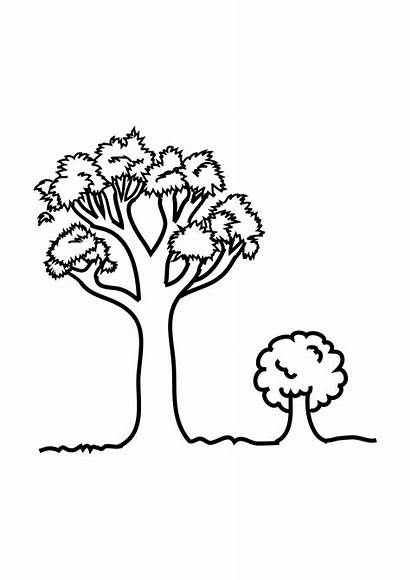 Coloring Tree Pages Drawing Worksheets Printable Clipart