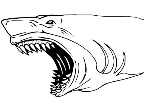 shark jaws coloring page coloring page book  kids