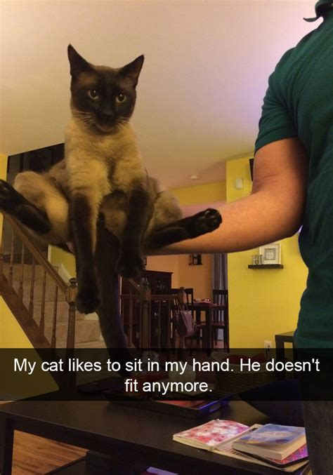 15+ Hilarious Cat Snapchats That You Need To See Right