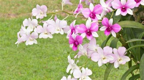 Gartenorchideen So Gedeihen Sie Richtig