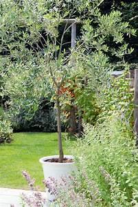 Planter Un Olivier En Pleine Terre : cultiver un arbre en pot gamm vert ~ Farleysfitness.com Idées de Décoration