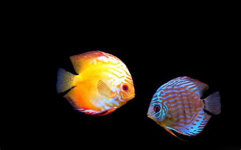 Animated Aquarium Desktop Wallpaper Windows 7 - animated aquarium desktop wallpaper 53 images