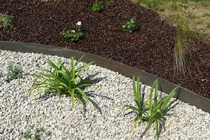 Plante De Bordure : plante pour bordure piscine ~ Preciouscoupons.com Idées de Décoration