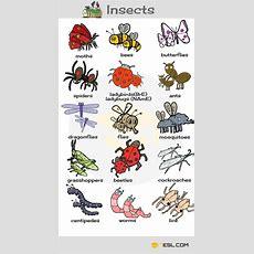 Animals Vocabulary Insects  English  English Vocabulary, English Language Learning Y Vocabulary