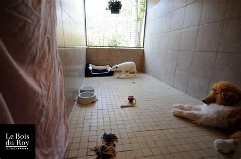 chambre avec 77 chambre avec préau pension pour chiens le bois du roy