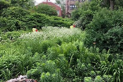 Backyard Clearing Jungle Animated Lawn Installation Sod