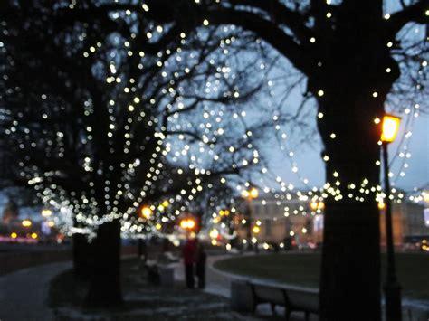 images tree branch winter light street night