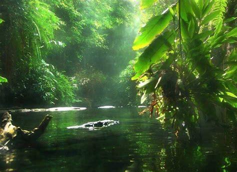 venezuela jungle amazon rainforest beautiful nature