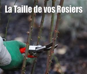 Comment Tailler Les Rosiers : la passion des rosiers la p pini re fil roses comment ~ Nature-et-papiers.com Idées de Décoration