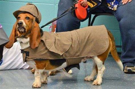 basset hound halloween costumes sherlock costume hounds dog holmes prove win always bassett
