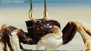 What is a Crustacean? - Definition, Characteristics ...
