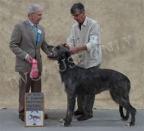 gray summit mo irish wolfhound club  america