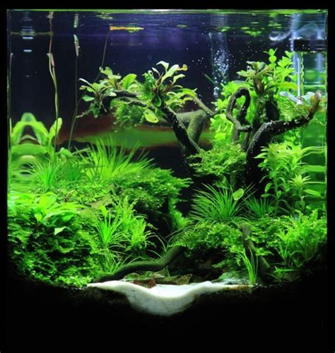 Aquascape Aquarium Design Ideas 11 Meowlogy