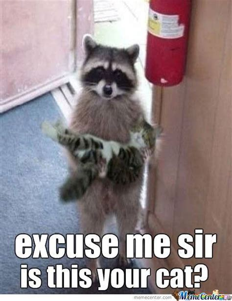 Funny Raccoon Meme - 17 best images about on pinterest guinea pigs funny raccoons and search