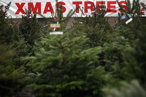 real xmas trees near me 2016 where to buy your real tree in
