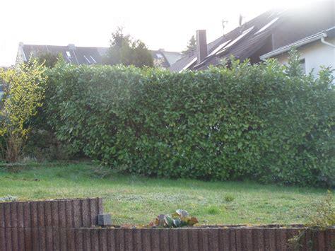 Sichtschutz Garten Erlaubt by Sichtschutz Zum Nachbarn Was Ist Erlaubt Haus