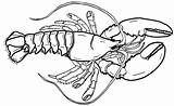 Coloring Lobster Sheet Giant Little Realistic Sheets Cartoon Pages Children sketch template