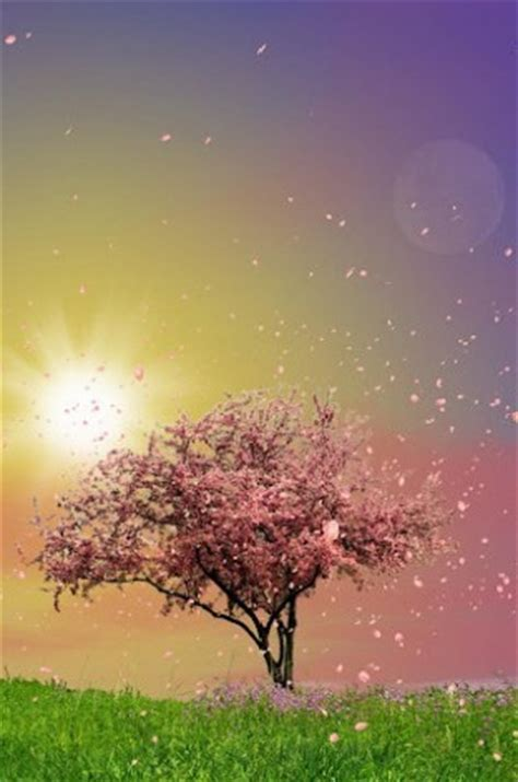 android wallpaper spring trees