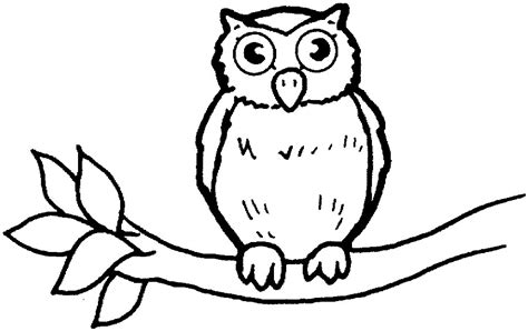 owl outline drawing owl outline clipart best