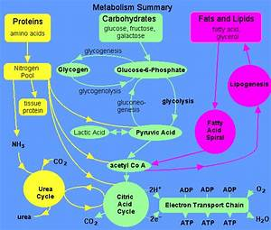 Overview Metabolism