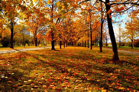 trees autumn city park wallpaper
