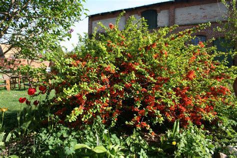 Japanischer Garten Mecklenburg Vorpommern by Aktion Offene G 228 Rten Mecklenburg Vorpommern 2012