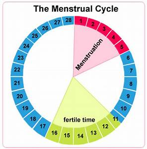 Calculation of menstrual cycle date
