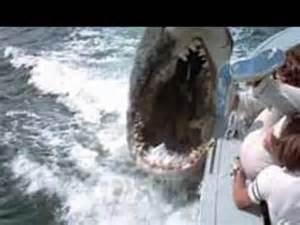 Best Shark Movies Worst