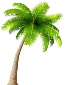 Transparent Palm Tree Clip Art