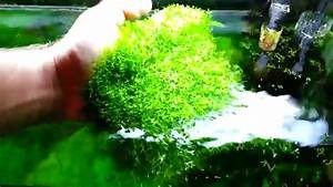Keep Your Riccia Moss Carpet Well Trimmed  Or This Will