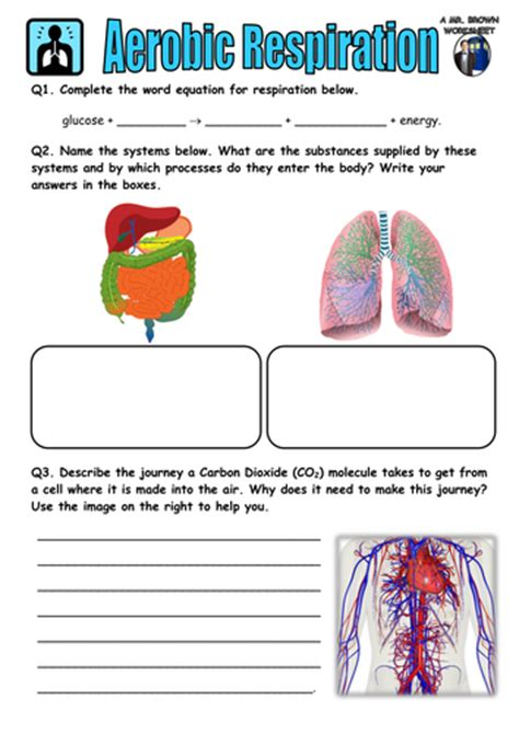 mr brown science worksheets teaching resources tes