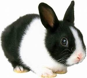 séraphin le petit lapin