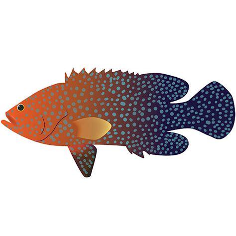 coral cod grouper fish vector clip illustrations clipart vectors markings illustration animal graphics cartoons istockphoto premium