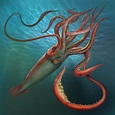 Giant Squids: Find out about their characteristics and ...