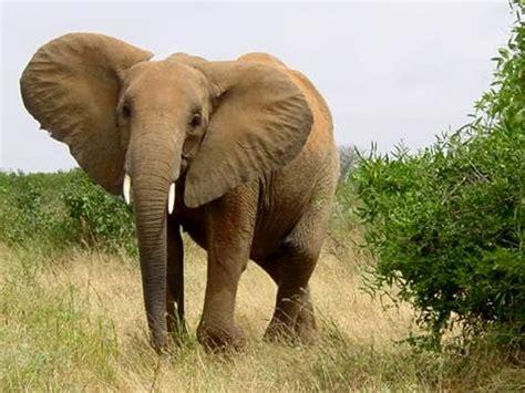 Turista Italiano Ucciso Da Un Elefante
