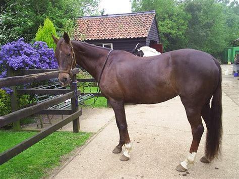 caballos criollo
