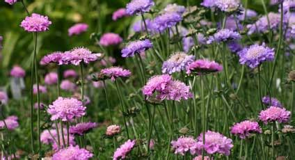 easy growing perennials easy to grow flowers low maintenance perennials
