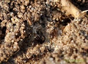 Was Mögen Ameisen Nicht : ameisen bek mpfen die 7 besten hausmittel mein pflanzenblog ~ Orissabook.com Haus und Dekorationen