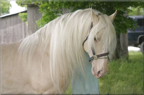 These 24 Horses Have The Most Unusual And Beautiful Colors