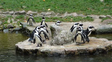 zoo pingwiny oliwa plik commons blogg vacances barn med wikimedia wikipedia faire pendant beste og