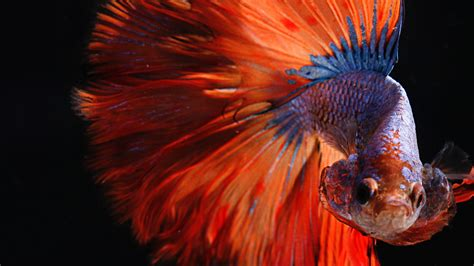 Charming Colorful Fish   HD Wallpapers