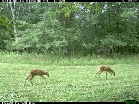 cuisines habitat food plots for deer are baiting habitat planning resource