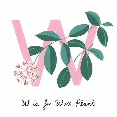 Common Guide Plants Apartmenttherapy Houseplants Plant Rubber