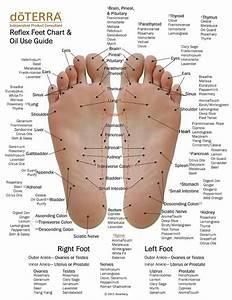 Foot Reflexology Oil Usage Chart Essential Oil Printables