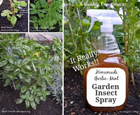 insect spray for plants garlic mint insect spray homemade recipe video tutorial gardens garden insects and plants
